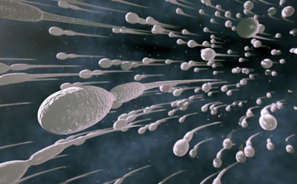 Estudio revela que el coronavirus  alteraría la calidad del esperma
