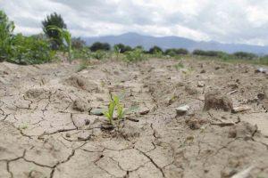 Afectados 14 mil productores por sequía